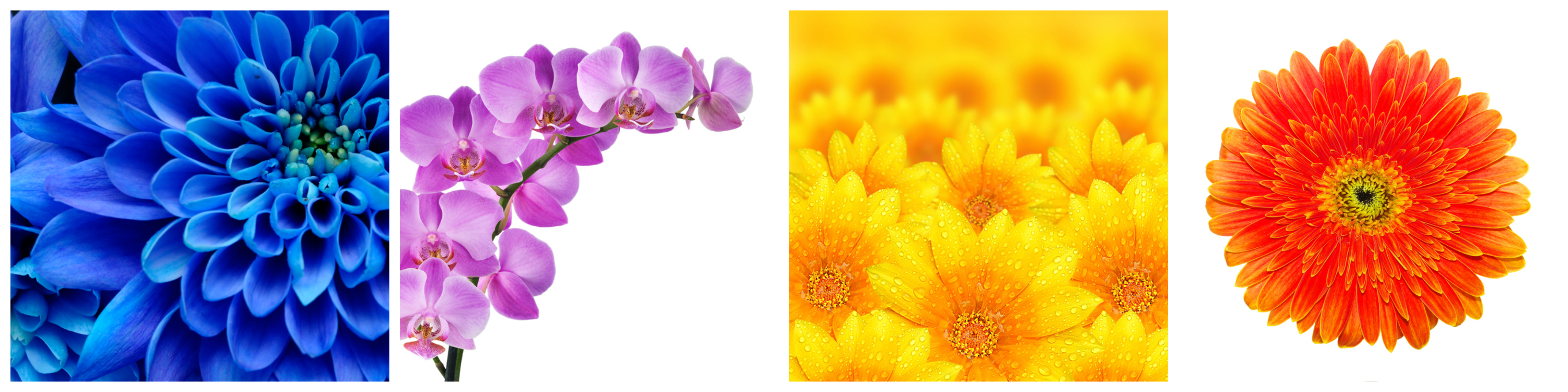fotografías colores.jpg