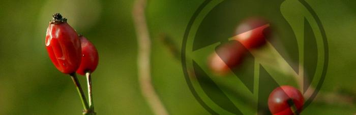 Marca de agua: personaliza tus imágenes en WordPress